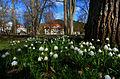 Frühling im Bad Mergentheimer Kurpark. 16.jpg