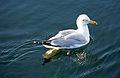 France-001247 - Morning Swim (15203840821).jpg