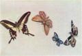 FujishimaTakeji-1900-1906-Notebooks Butterflies-4.png