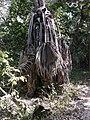 Gambia06Bijilo0036 (5420494565).jpg