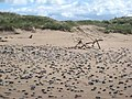 Gap in the dunes - geograph.org.uk - 484756.jpg