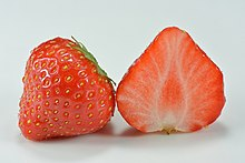 Garden strawberry (Fragaria × ananassa).jpg