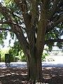 Gardenology.org-IMG 0327 rbgs10dec.jpg