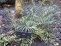 Gardenology.org-IMG 2020 hunt0903.jpg