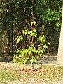 Gardenology.org-IMG 7240 qsbg11mar.jpg