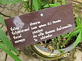 Gardenology.org-IMG 7611 qsbg11mar.jpg