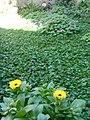 Gardens in Baghdad 41.jpg