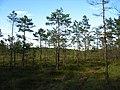 Garkalnes novads, Latvia - panoramio - SkyDreamerDB (19).jpg