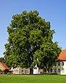 Geo-Naturpark Bergstraße-Odenwald, Baum auf dem Klostergelände Lorsch 02.jpg
