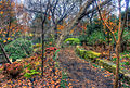 Gfp-texas-dallas-arboretum-path.jpg