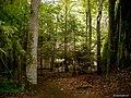 """Gierłoż - Wilczy szaniec - """"Die Wolfschanze"""" - panoramio.jpg"""
