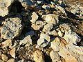 Gisement d'ammonites Méjannes-le-Clap abc3.jpg