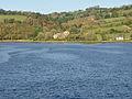 Gnatham, Tavy Estuary 2.jpg