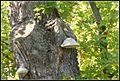 Gombák - panoramio (1).jpg
