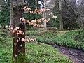 Gortin Glens Forest Park (11) - geograph.org.uk - 1712659.jpg
