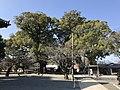 Grand camphor tree of Zendoji Temple.jpg