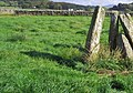 Grass in the field next to the standing stones at Newton Farm - geograph.org.uk - 1420007.jpg