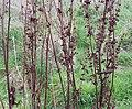 Grasses (28019320375).jpg