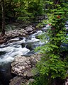 Great Smoky Mountains N P Tennessee (29755099).jpeg