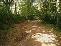 Green lane - geograph.org.uk - 231156.jpg