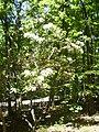 Greenbelt Park, Greenbelt, Maryland 002.JPG