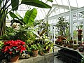 Greenhouse - Frick Art & Historical Center - Pittsburgh, PA - DSC05056.JPG