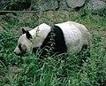Großer Panda Bao Bao Berlin W 08.jpg