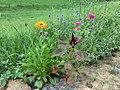 Guerilla Gardening am Siegauen Deich - panoramio.jpg