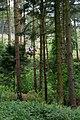 Guisborough Woods - geograph.org.uk - 432463.jpg