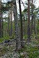 HådellsGammelskog 3632.JPG
