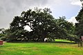 HAMPTON UNIVERSITY Emancipation Oak.jpg
