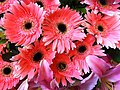 HK Central flowers City Hall art expo pink n red pattern Nov-2012.JPG