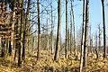 Hajnówka, Poland - panoramio (198).jpg