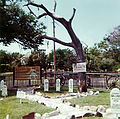 Hanging Tree at Dodge City (color print).jpg