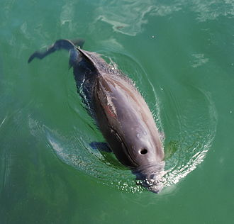 Little Belt - Harbour porpoise.