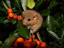Летом каждый зверек строит себе гнездо в виде сплетенных.