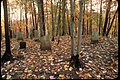 Headstones surrounding by colorful autumn leaves at Delaware Water Gap National Recreation Area (c6a5fc92-01f7-41f9-bf52-0da6b9da5bb3).jpg