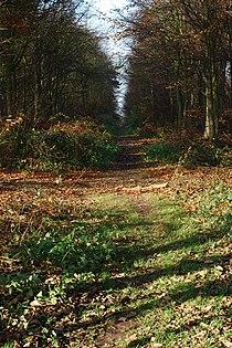 Heath Wood (2) - geograph.org.uk - 286628.jpg