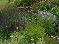 Herbaceous border, Pool Meadow - Flickr - peganum (1).jpg