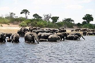 Kavango–Zambezi Transfrontier Conservation Area - Image: Herd of elefants