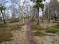 Hiking trail at northwest of the Altkönig 4.jpg