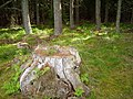 Holy Wood - geograph.org.uk - 207854.jpg