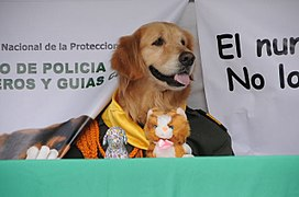 Homenaje a los animales héroes de Colombia (5748223891).jpg