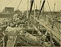 Horses, saddles and bridles (1906) (14578530967).jpg