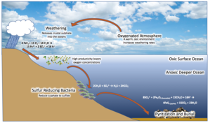 Euxinia - Diagram of mechanisms of euxinia in the Canfield Ocean
