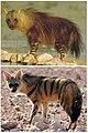 Hyaenifromes Diversity.jpg