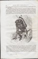 Hylobates agilis - 1700-1880 - Print - Iconographia Zoologica - Special Collections University of Amsterdam - UBA01 IZ19800087.tif