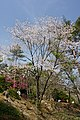 Hyogo Prefectural Flower Center Kasai Japan15s3.jpg