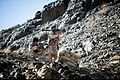 IRGC Ground Force Commandos in Pictures-28.jpg