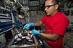 ISS-53 Joseph Acaba installs botany gear for the Veggie facility.jpg